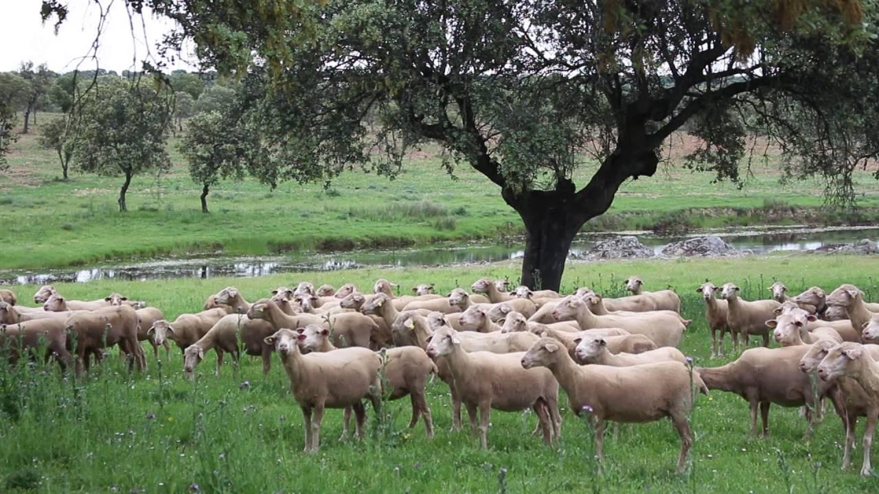 Ayudas de 40 millones de euros beneficiarán a unos 1.400 ganaderos y contribuirán a mejorar la renta, luchar contra el cambio climático y evitar incendios
