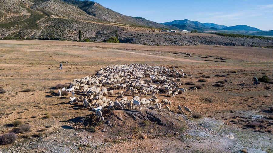 El sector ovino y caprino en la economía del mundo rural en la Unión Europea