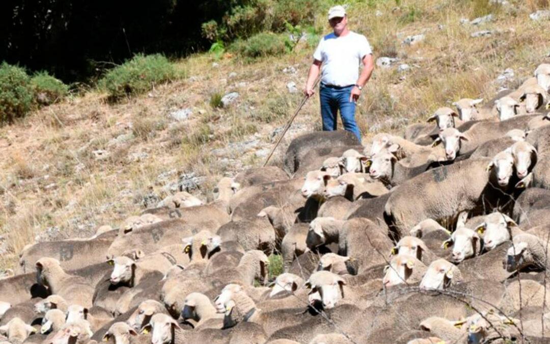 España apoya la declaración del año 2026 como Año Internacional de los Pastos y el Pastoreo